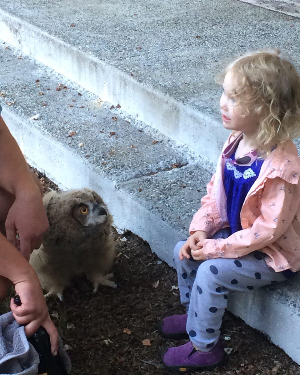 Izzy and owl
