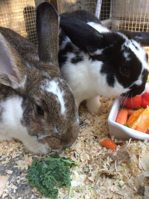 bunnies eating