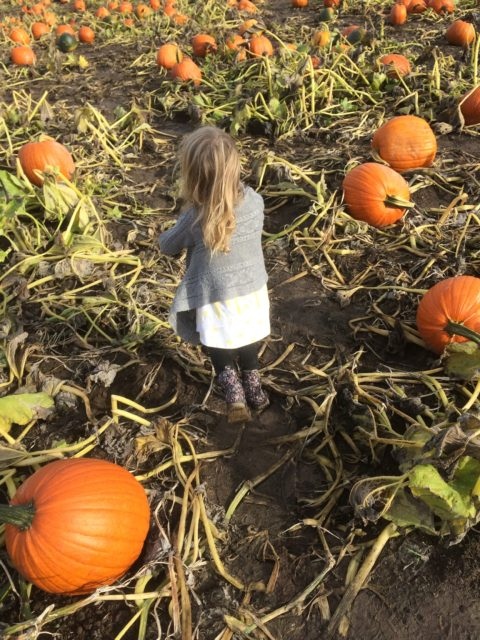 girl in pumpkin patch