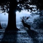 Obscurité ce dimanche dans E=M6. Pourquoi certains animaux voient-ils mieux la nuit ?