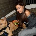 Ariana Grande prend la défense de chiens abandonnées pendant Honeymoon Tour !