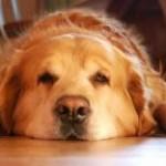 Votre chien a mal au dos?