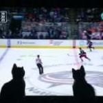 Des chatons regardent un match de Hockey