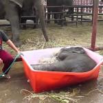 Que fait un éléphant dans son bain? Il s'amuse…