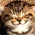 Cinq conseils pour rendre votre chat heureux