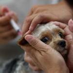 Pourquoi vacciner pitou?