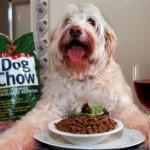 Nutrition animale: un casse-tête pour les maîtres