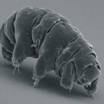 Des scientifiques japonais parviennent à faire revivre un (petit) animal congelé depuis 30 ans