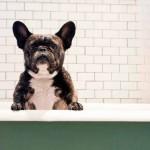 Bicarbonate : l'hygiène au naturel pour nos animaux