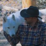 Le loup fait-il un bon animal de compagnie?