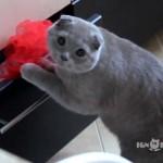 Ce chat vous fera craquer