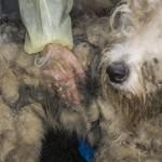 5 choses à vérifier avant d'adopter un animal chez un éleveur