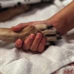 Congés payés pour deuil d'animaux de compagnie