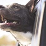 10 trucs contre la mauvaise haleine du chien