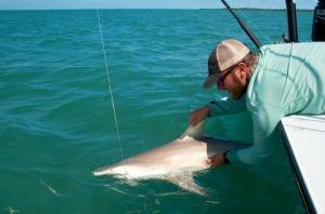 Shark release in Key West