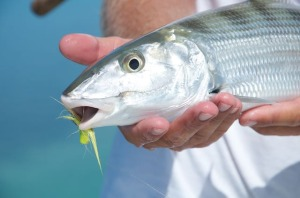 key west bonefish