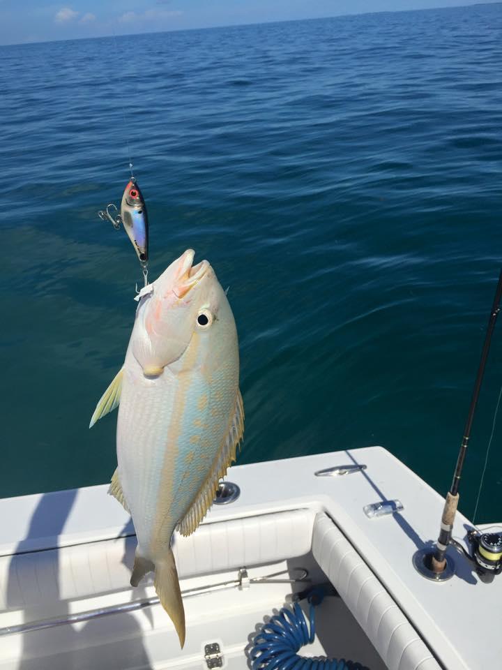 Key West Yellowtail