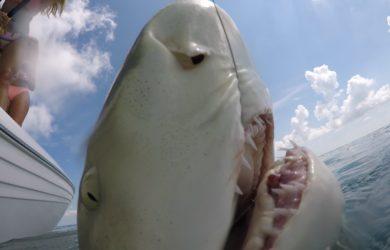 key west shark fishing