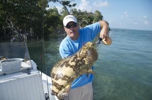 Baby goliath grouper