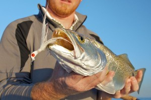 Sea trout caught in the winter time key west backcountry