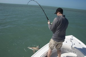 Shallow water shark fishing