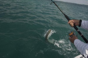 Light Tackle Tarpon Fishing