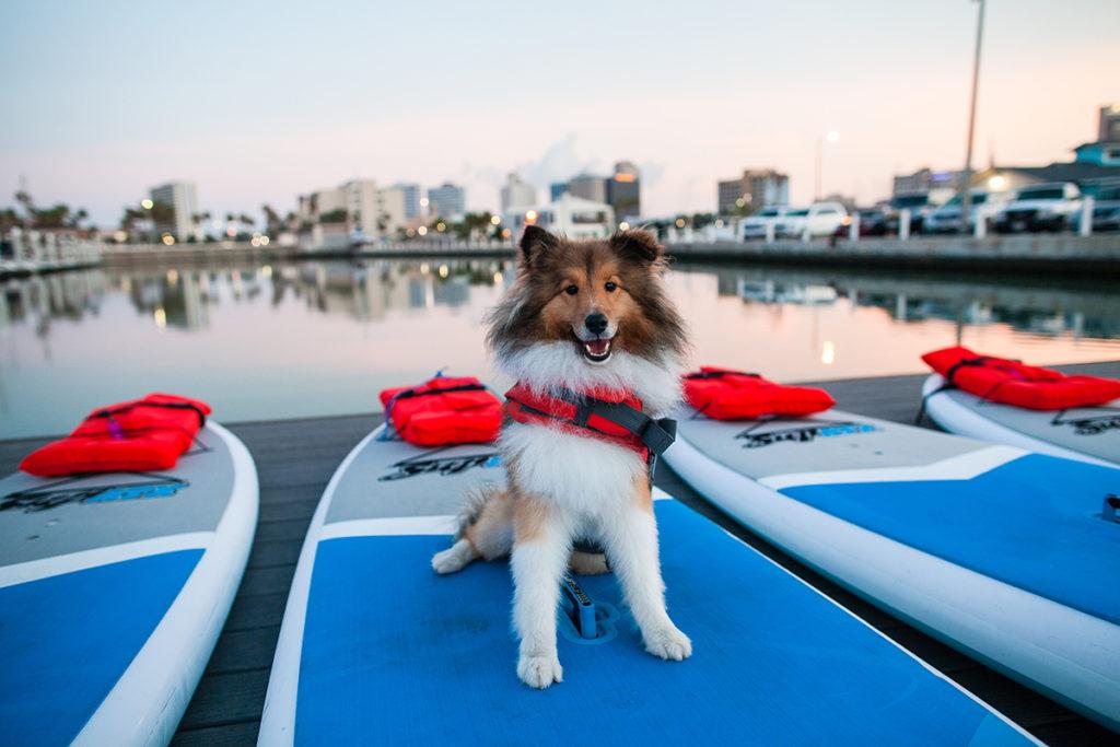 Water Dog's Mascot