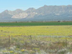 McNeal AZ 16