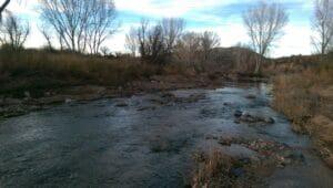 San Pedro River AZ 04