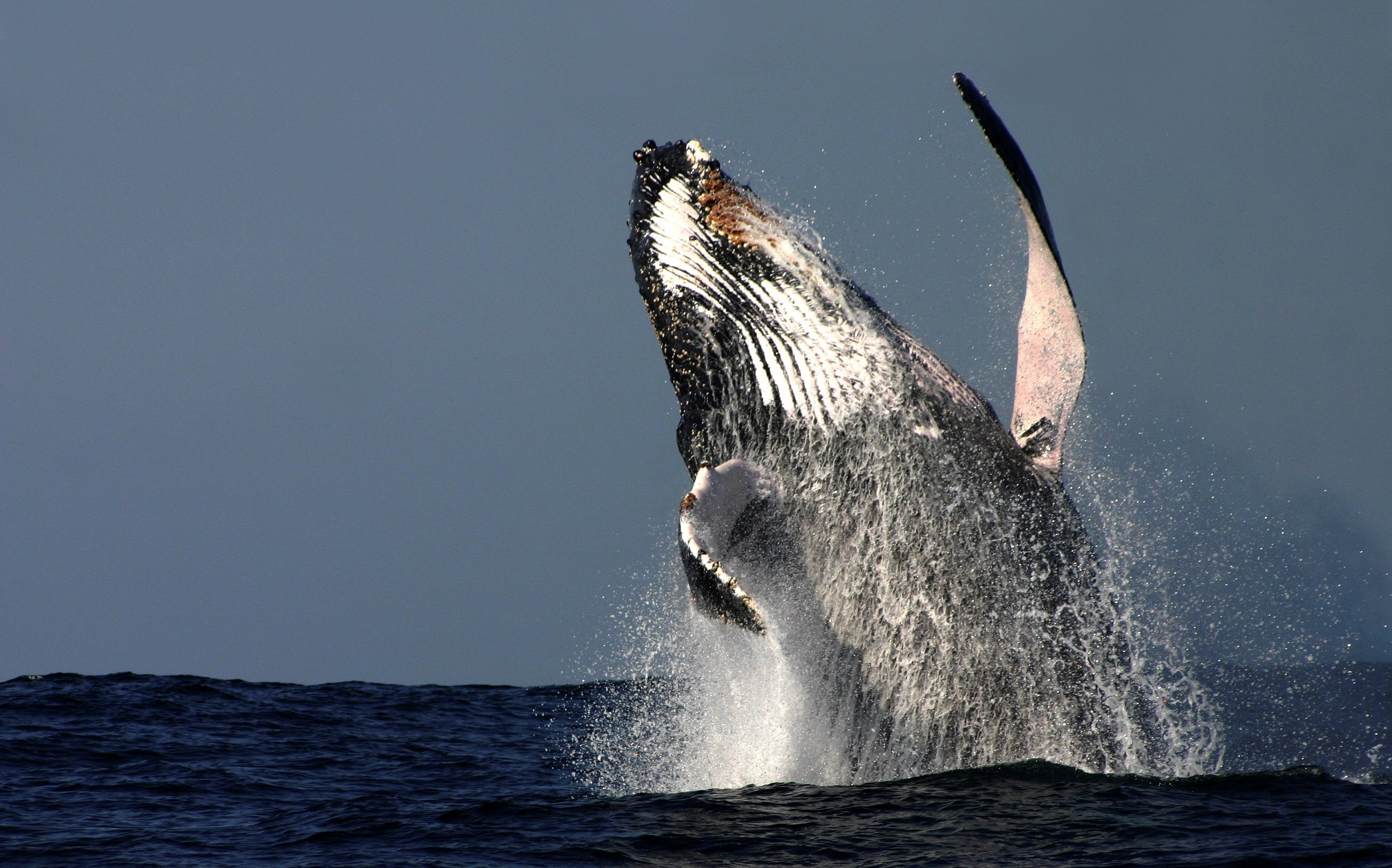 Hervey Bay becomes candidate Whale Heritage Site