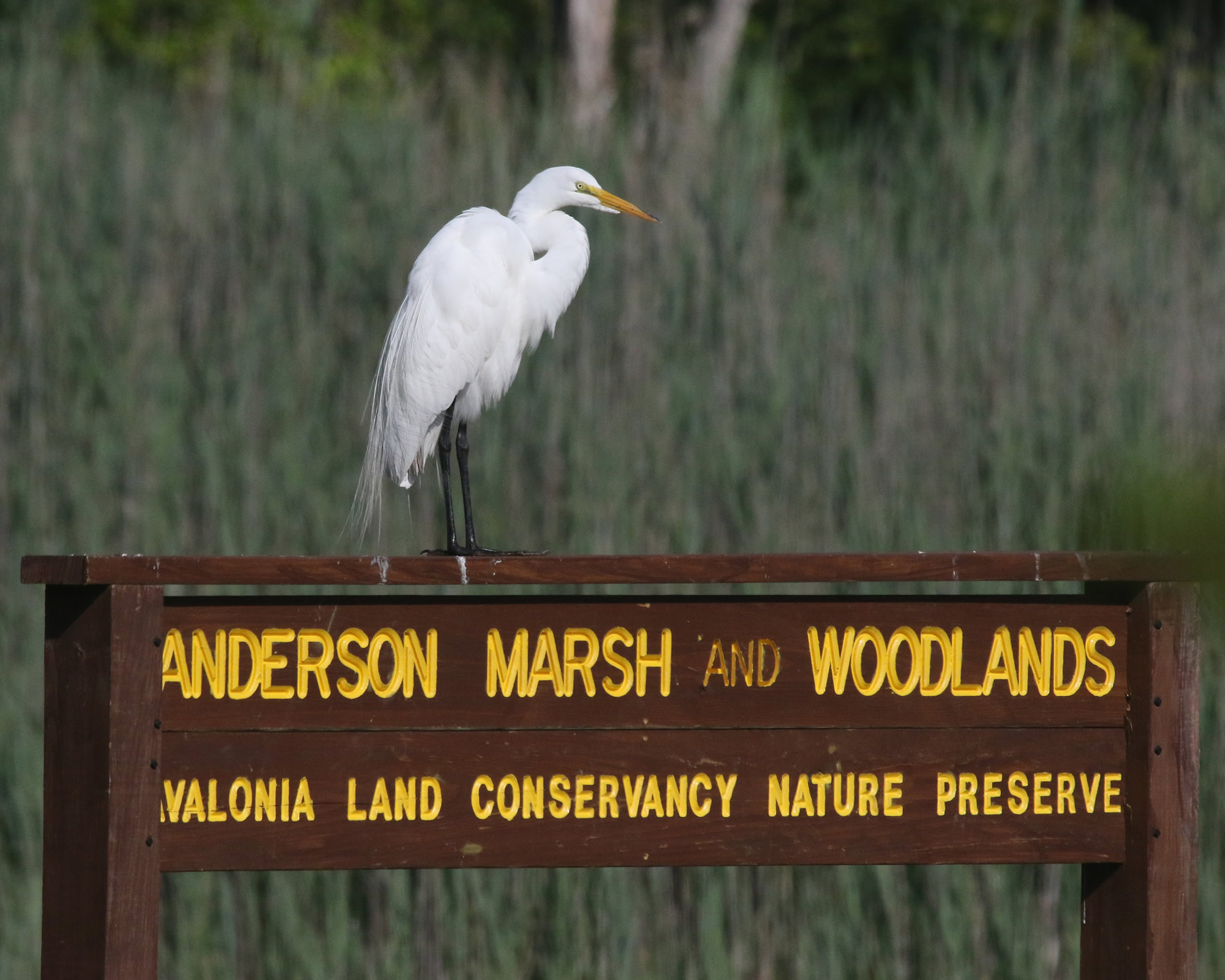 Land, Water, And Wildlife Are Being Protected Thanks To You! (Annual Appeal 2017)
