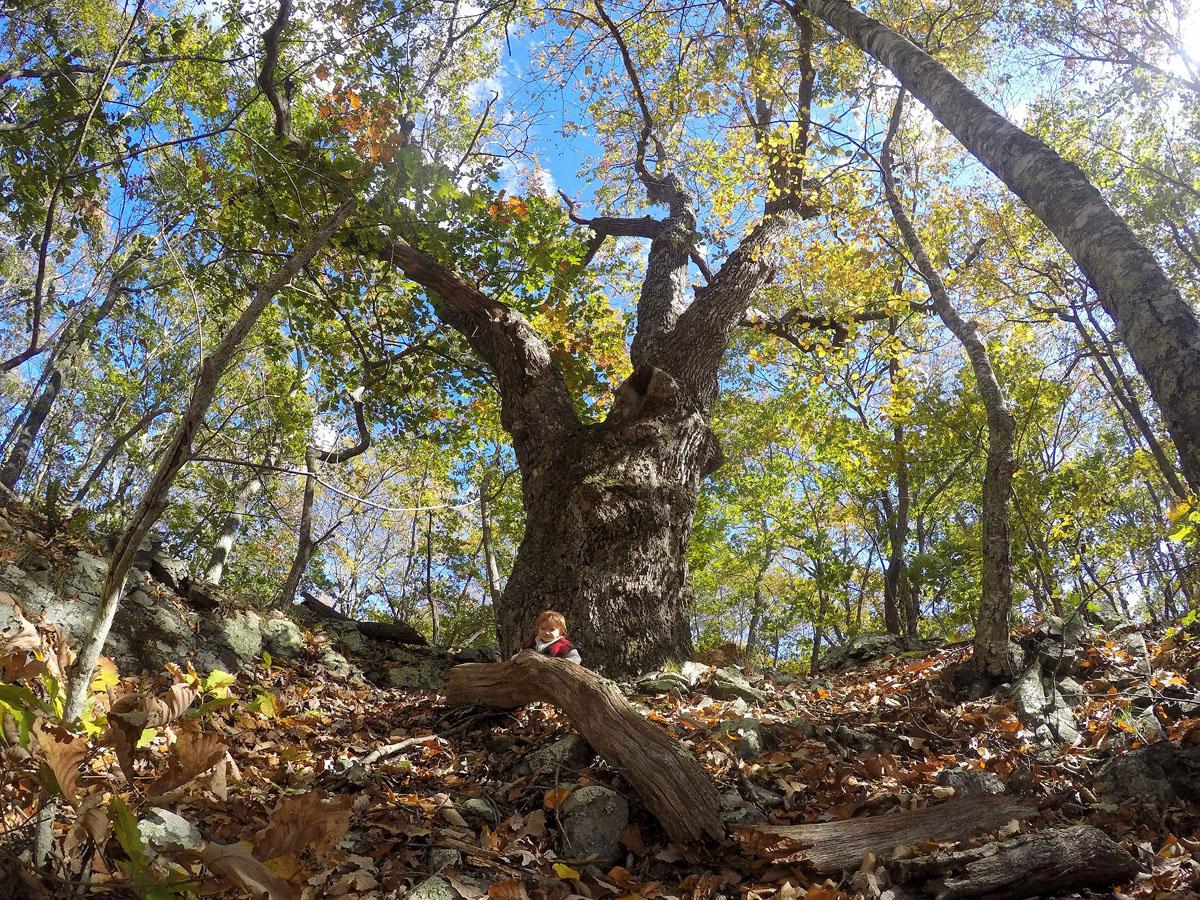 TriTown Forest Preserve
