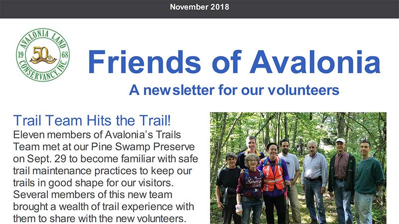 Volunteer Newsletter: November 2018