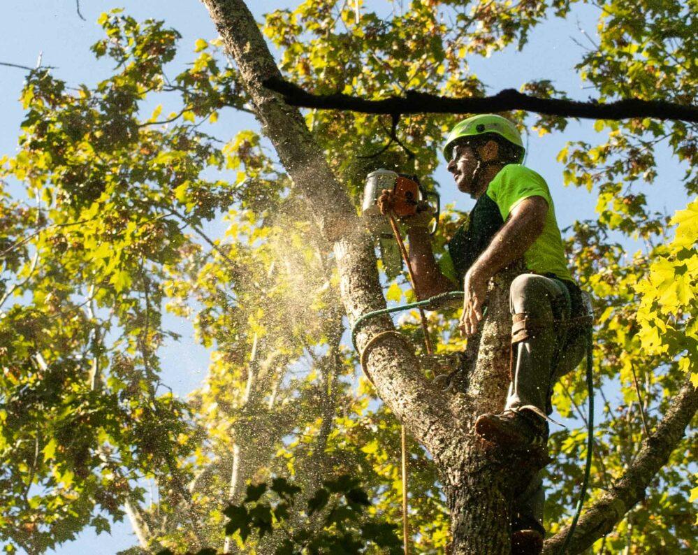 Ttfp Tree Work