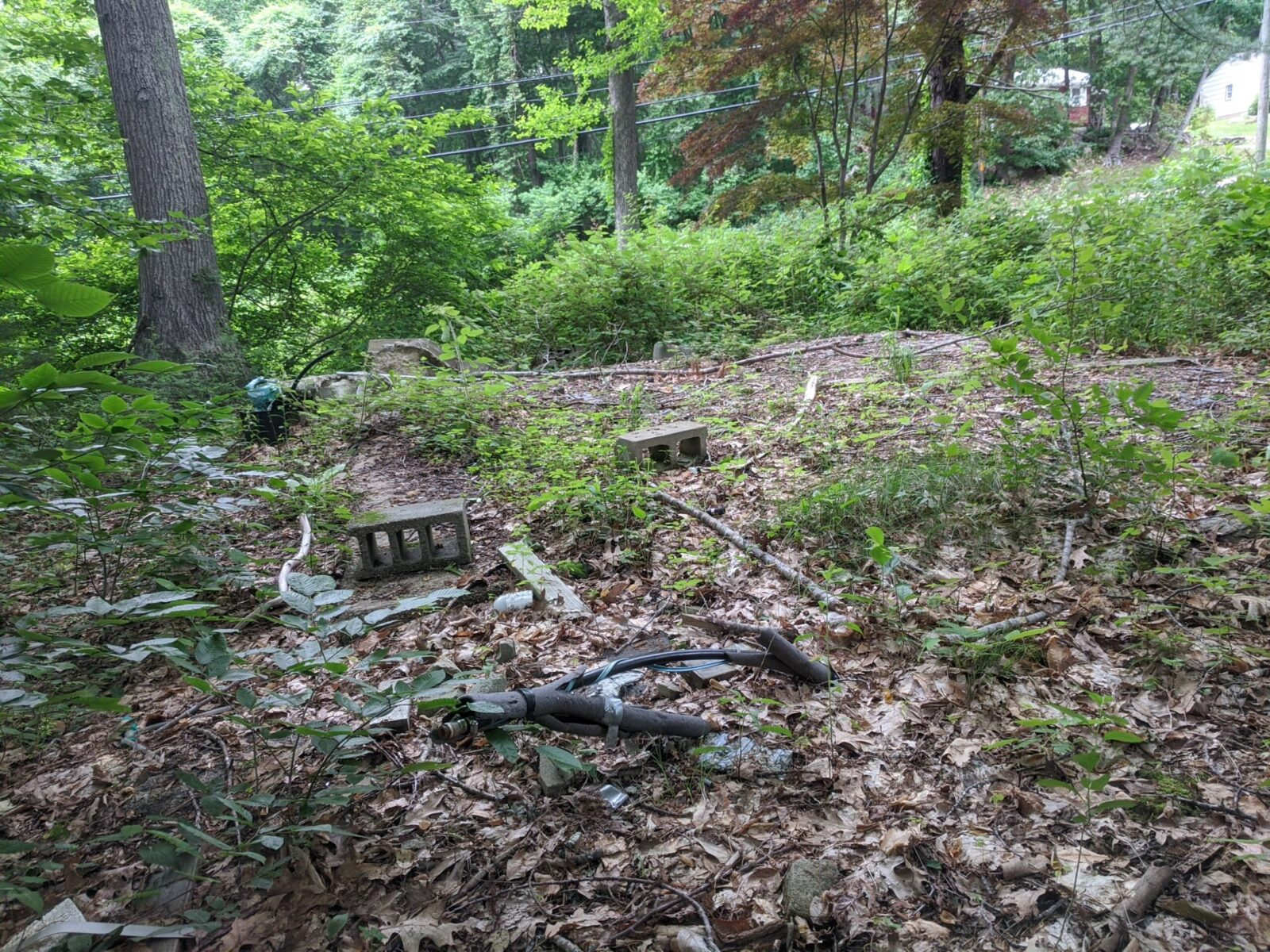 A Half Acre Makes A Big Difference For Avalonia, Ledyard, And State