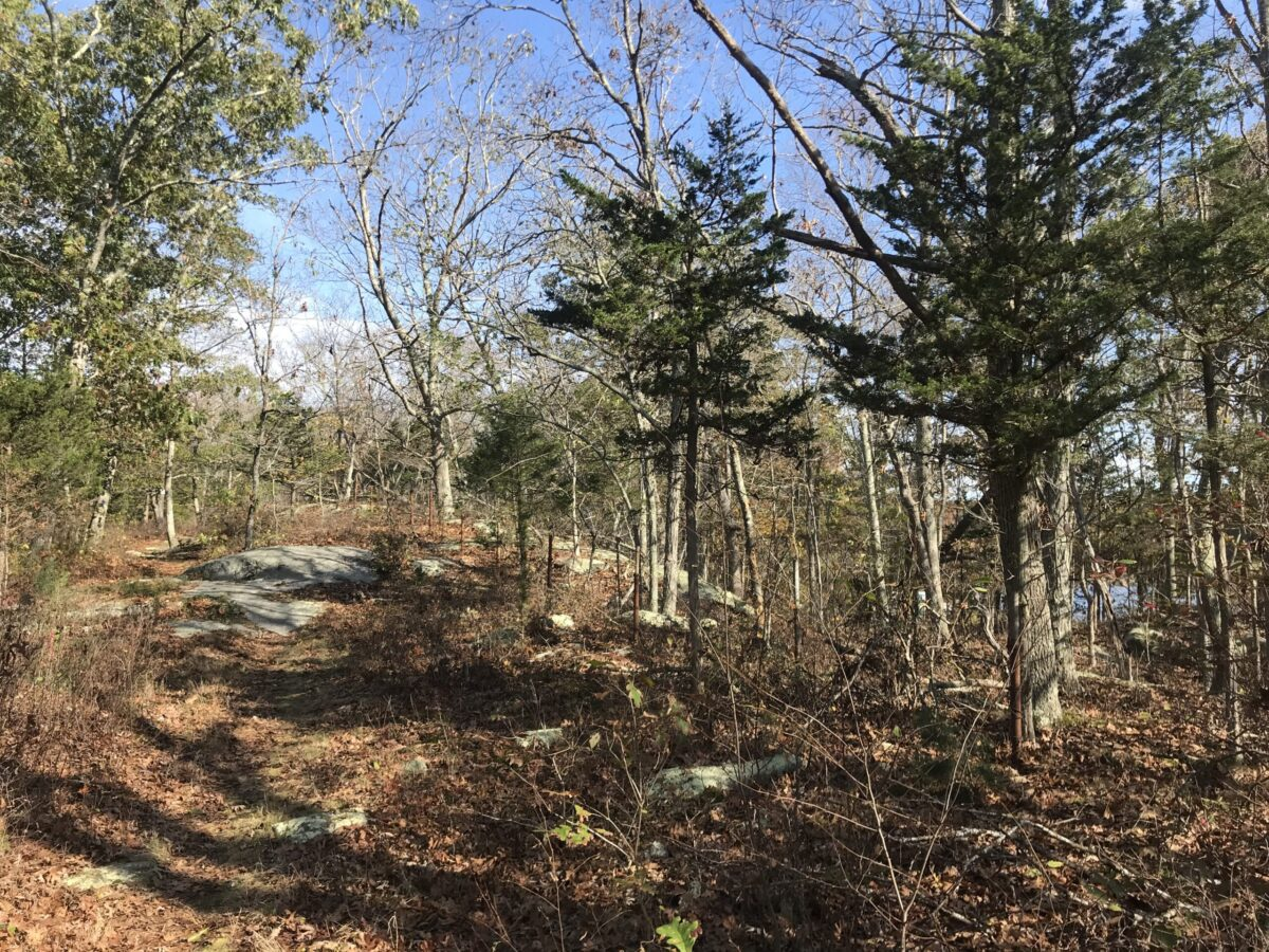 Avalonia Trail Finder Review: White Cedar Swamp & Deans Mill Preserve