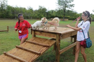 UIW students volunteer at the Animal Defense League as part of Meet the Mission.