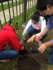 A baby tree takes root thanks to the UIW team.