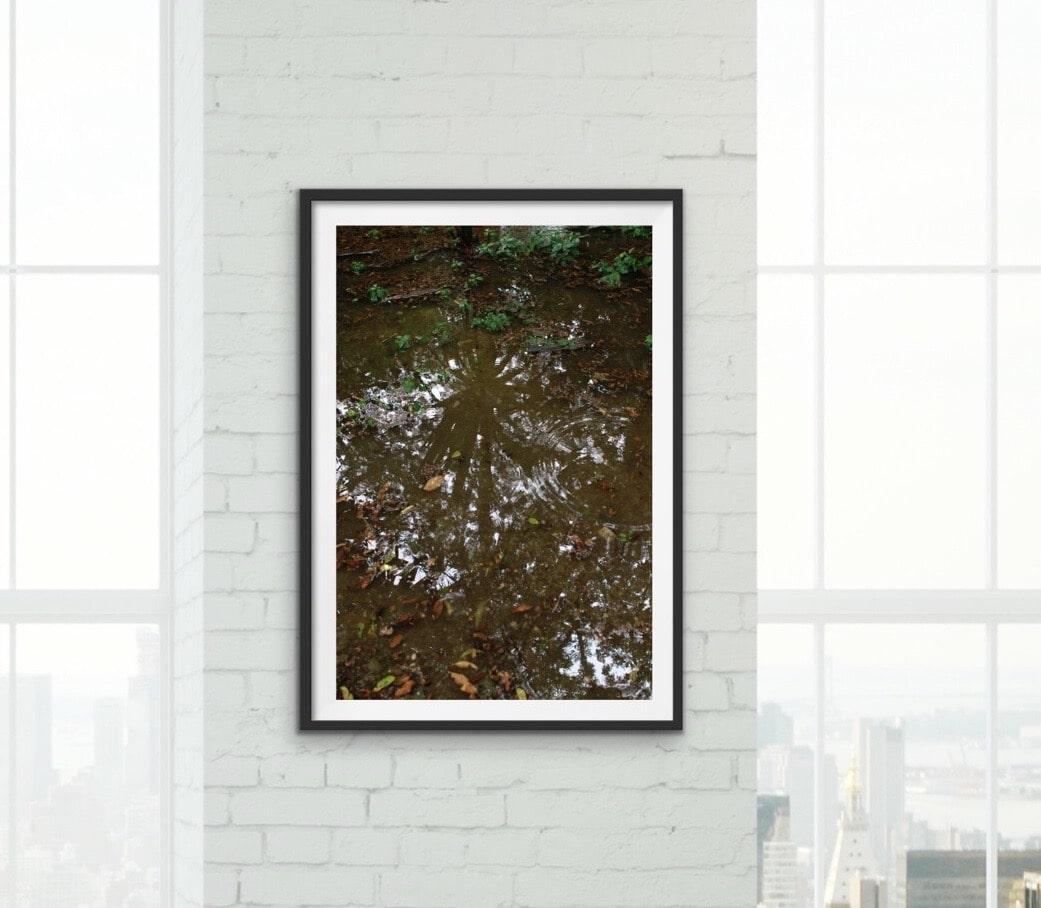 Forest Floor Framed