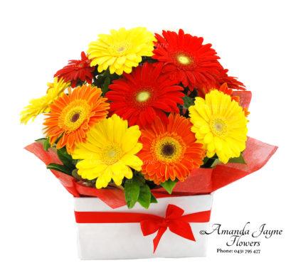 Bright Delight Gerbera box arrangement