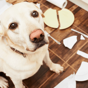 bad dog in the trash
