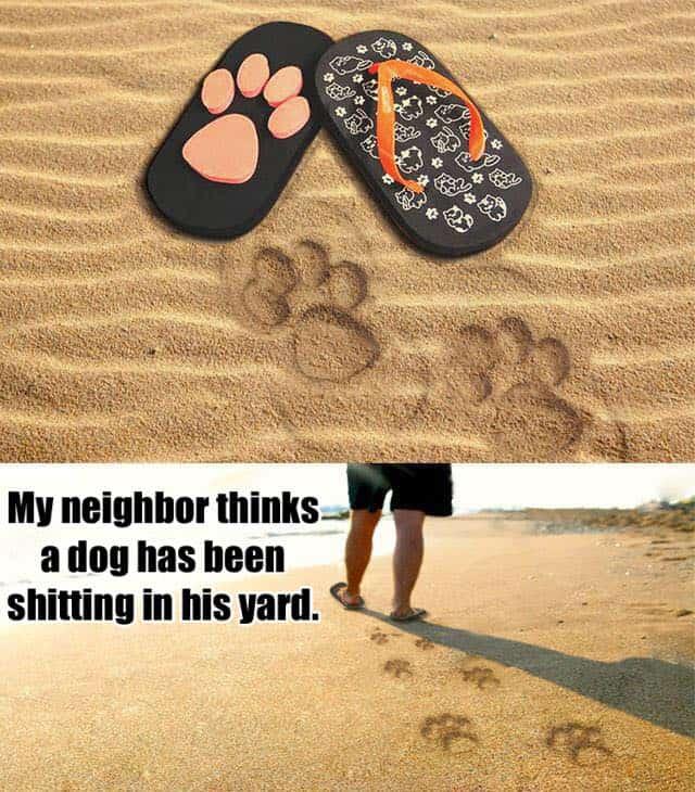dog flip flops