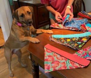 dog looking at bandana samples