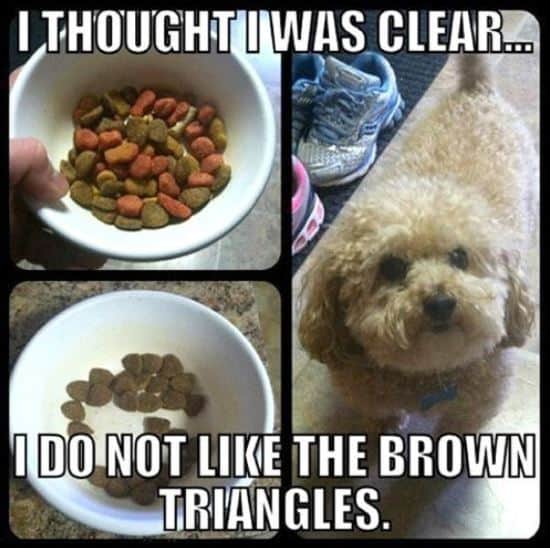 dog food can be unappealing