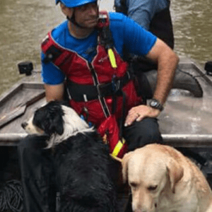 dogs flooding hurricane safety