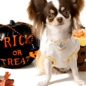 diy halloween for dogs