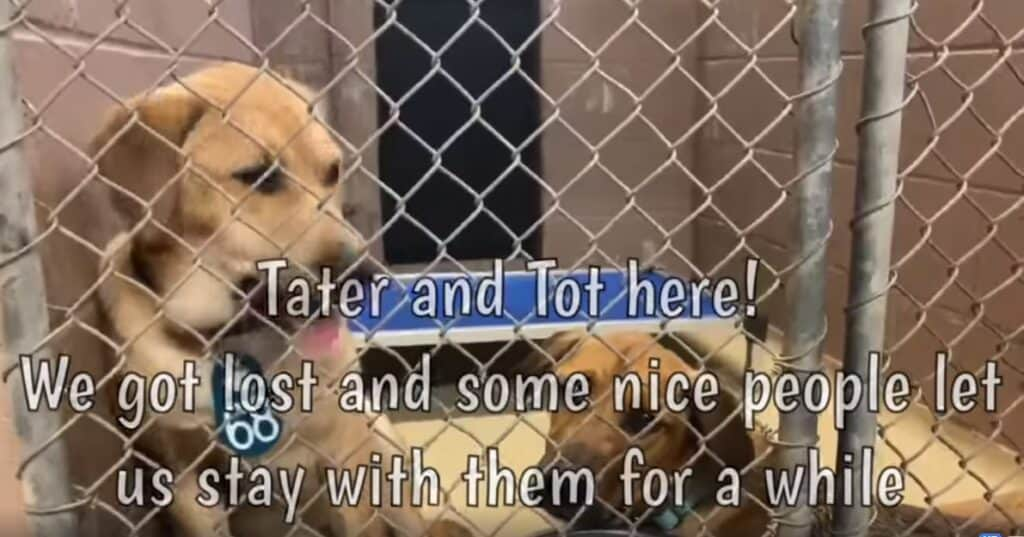 Tater and Tot dog networking video