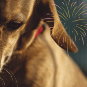 dog fireworks anxiety