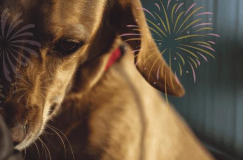 dog fireworks anxiety