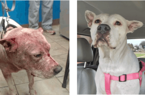fostering saves lives before and after